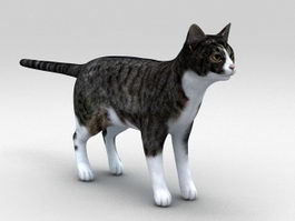 Classic Tabby Cat 3d model preview