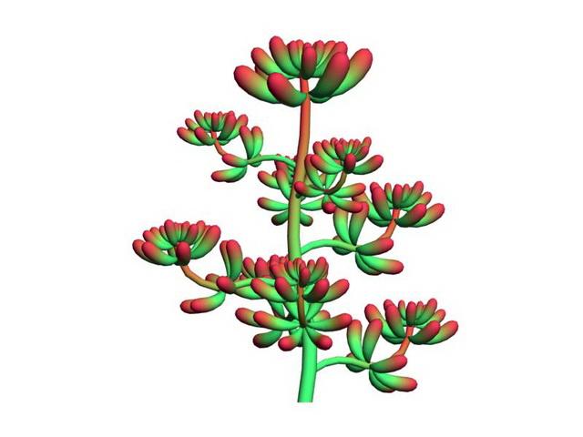 Red Sedum Pachyphyllum 3d rendering