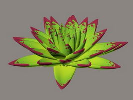 Echeveria Agavoides Ebony 3d preview