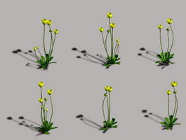 Wild Buttercup Flower 3d preview