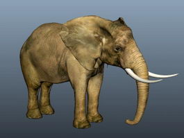 Asian Elephant 3d preview