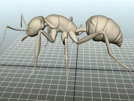 Big Ant 3d preview