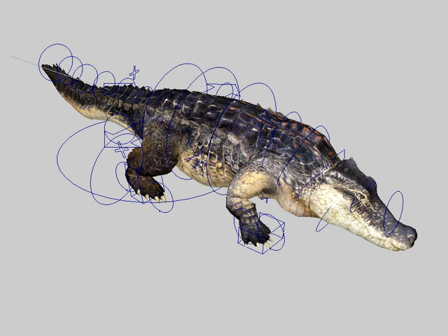 Animated Alligator Rig 3d rendering