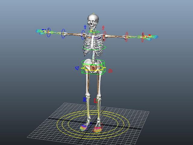 Human Skeleton Rig 3d rendering