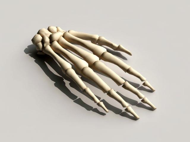 Hand Bone 3d rendering