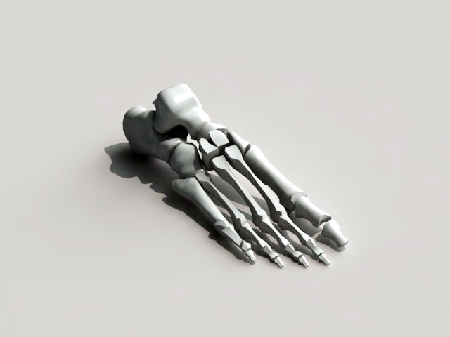 Foot Skeleton Bone 3d rendering