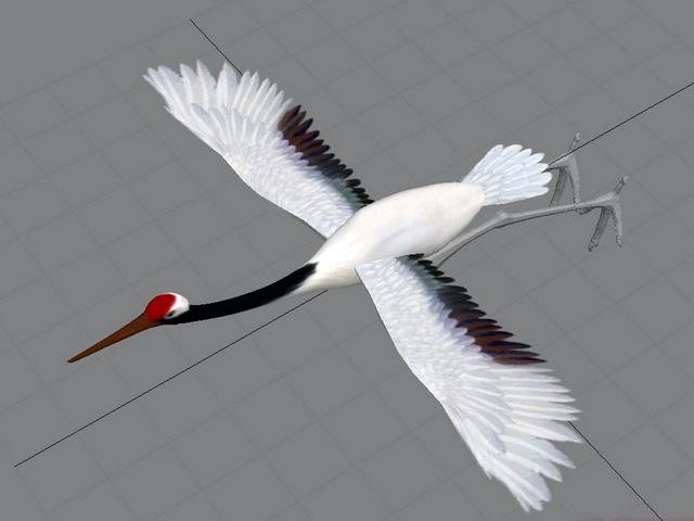 Crane Animal Animation 3d rendering