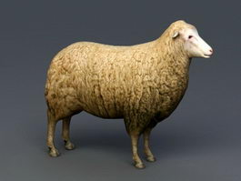 Female Sheep 3d preview