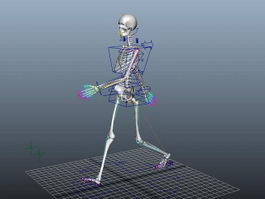 Animated Female Skeleton Rig 3d preview