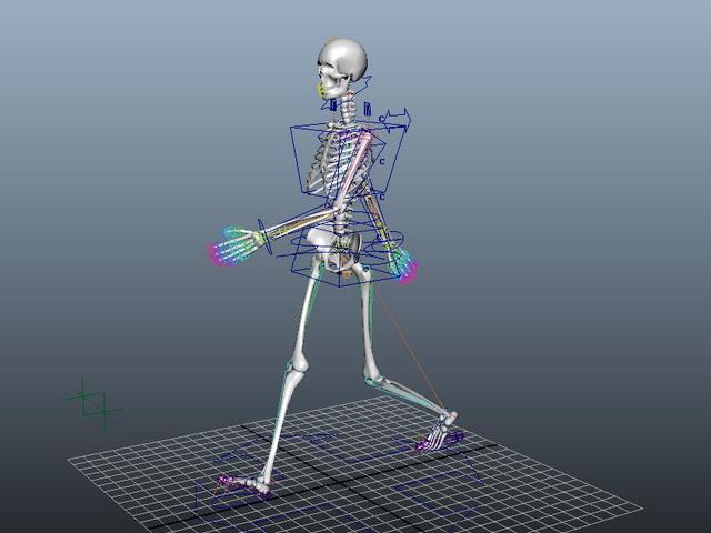 Animated Female Skeleton Rig 3d rendering