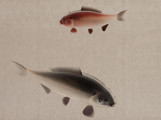 Fish Swimming Animation 3d rendering