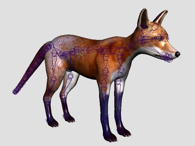 Red Fox Rig 3d rendering