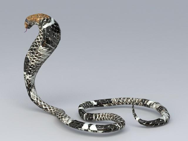 Black King Cobra 3d rendering