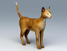 Abyssinian Cat 3d model preview