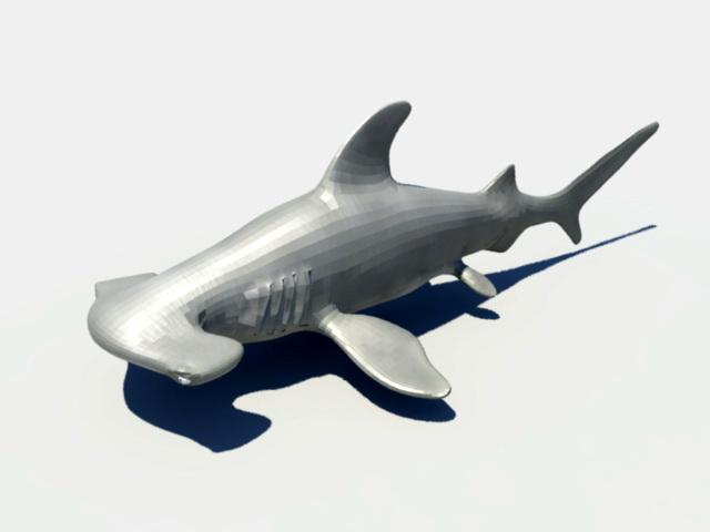 Hammerhead Shark Rig 3d rendering