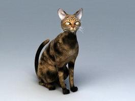 American Shorthair Cat 3d model preview