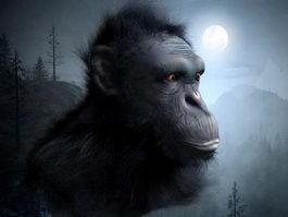 Chimpanzee Head 3d model preview