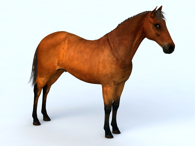 Brown Horse 3d rendering