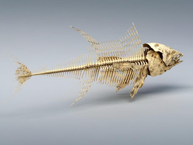 Tuna Fish Skeleton 3d rendering