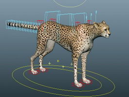Cheetah Running Rig 3d preview