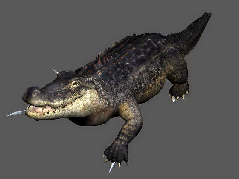 Crocodile Attacking Animated Rig 3d rendering