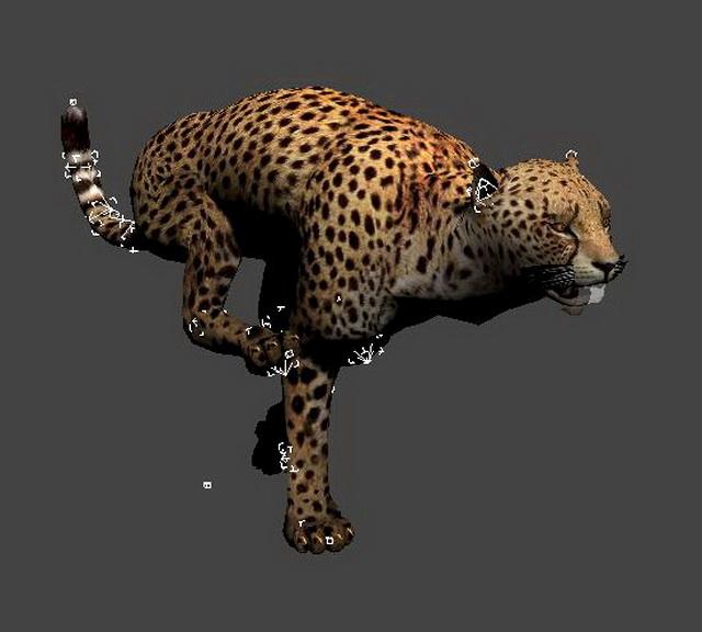 Cheetah Running Animated & Rig 3d rendering