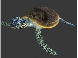 Sea Turtle Animated & rig 3d preview