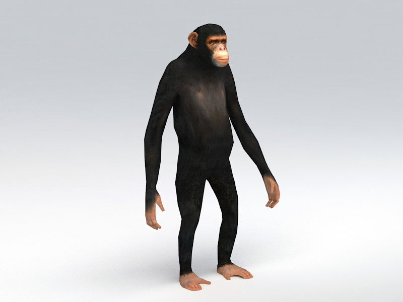 Animated Chimpanzee Rig 3d rendering