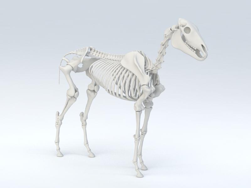 Horse Skeleton 3d rendering