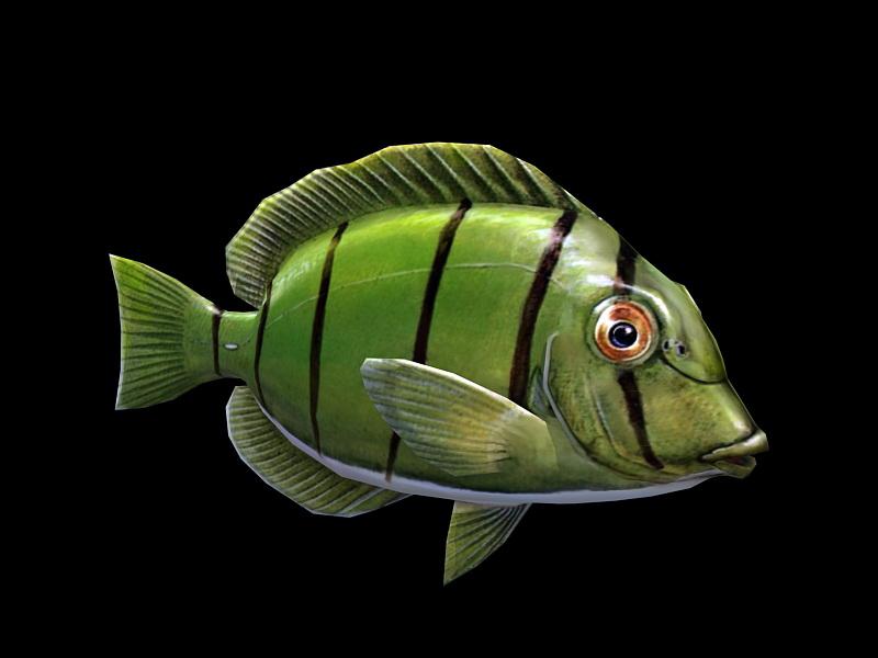 Green Tang Fish 3d rendering