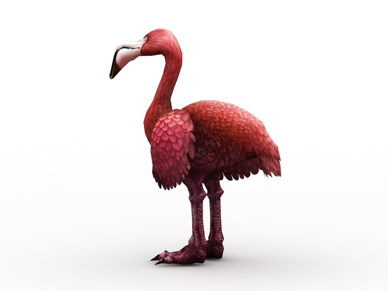 Toucan Breed Ostrich 3d rendering