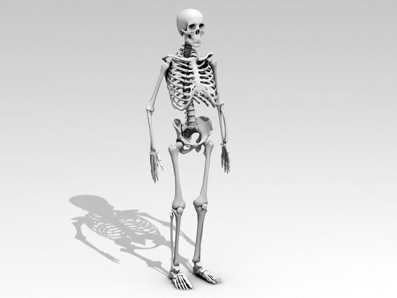 Human Anatomy Skeleton 3d rendering