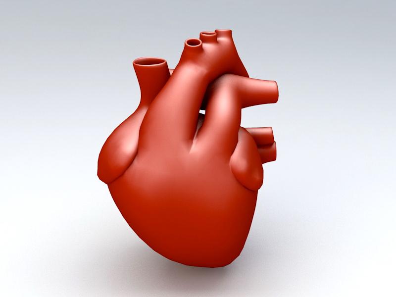 Human Heart 3d Model Object Files Free Download Modeling