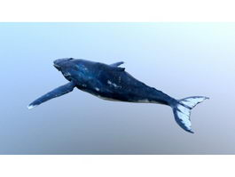 Baleen Whale 3d preview