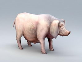 Low Poly Sow Pig 3d preview
