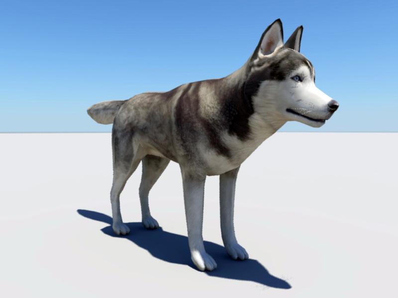 Husky Dog 3d rendering