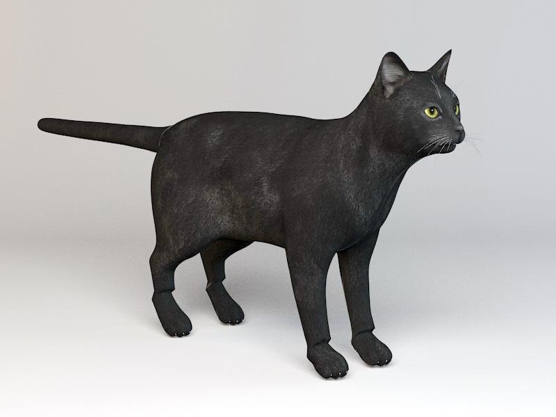 Black Cat Rig 3d rendering