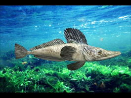 Southern Ocean Icefish 3d preview