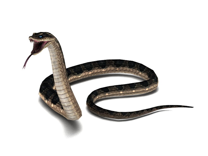Snake Attacking Animation 3d rendering