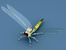 Dragonfly Insect 3d preview