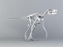 Velociraptor Skeleton 3d preview
