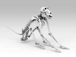 Baboon Skeleton 3d preview