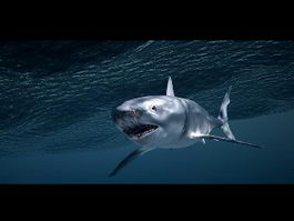 Shark Underwater 3d preview