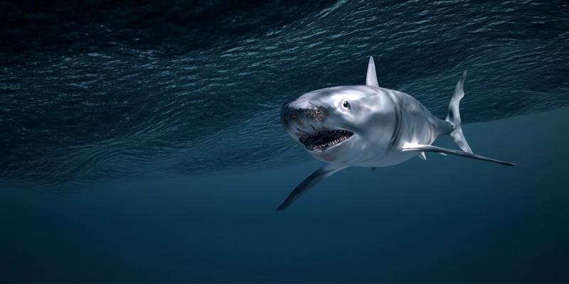 Shark Underwater 3d rendering