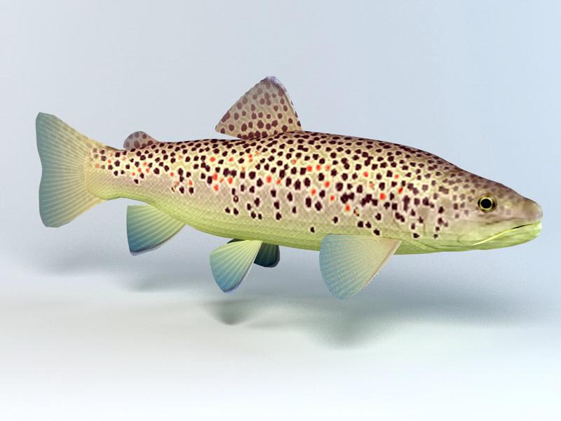 Brown Trout 3d rendering