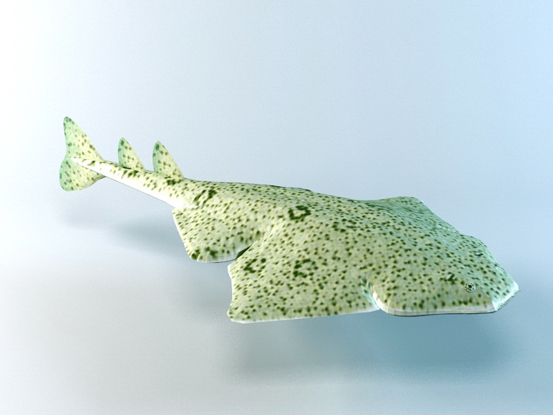 Angel Shark 3d rendering