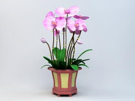 Potting Phalaenopsis Orchid 3d preview