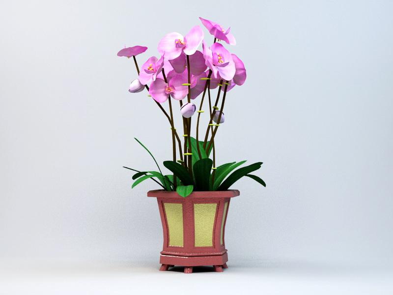 Potting Phalaenopsis Orchid 3d rendering