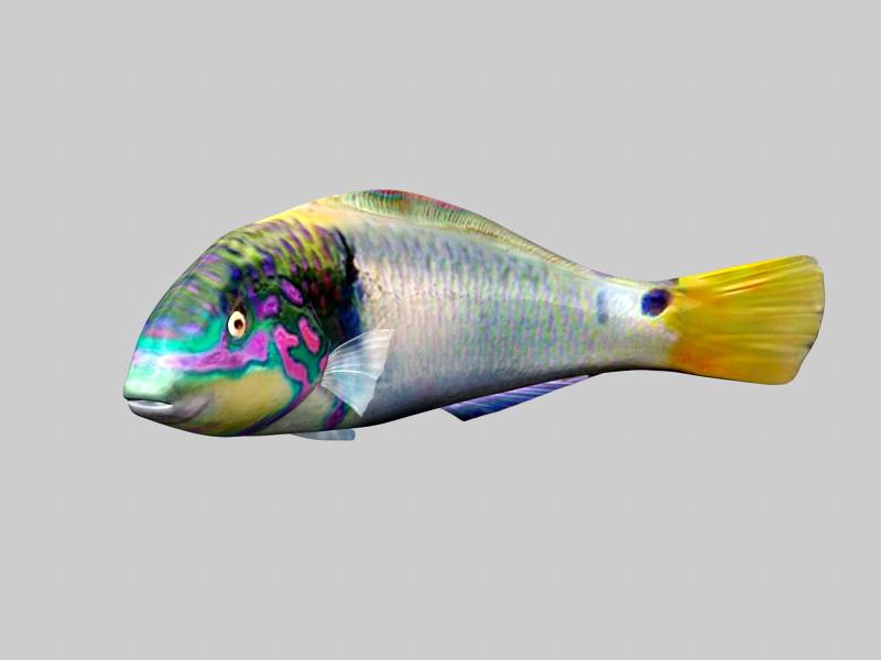 Blue Gourami Fish 3d rendering