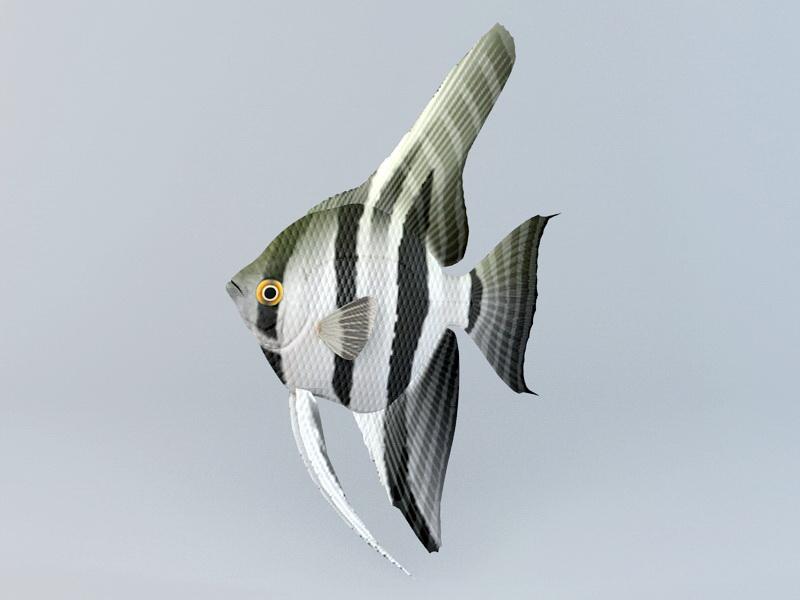 Freshwater Angelfish 3d rendering